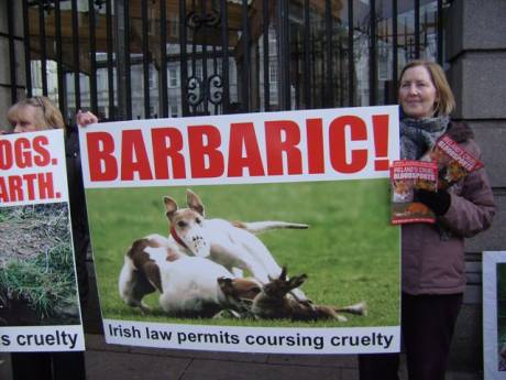 Hare coursing cruelty